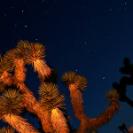 Colin Fletcher_Andreas M Cohrs_California hiking_Mojave Desert_Joshua tree and stars