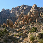 Colin Fletcher_Andreas M Cohrs_California hiking_Mojave Desert_Christmas tree pass