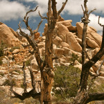 Colin Fletcher_Andreas M Cohrs_California hiking_Mojave Desert_New York Mountains