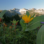 Mule ears, Paintbrush, Lupines