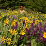 Colin Fletcher_Andreas M Cohrs_California hiking_Warner Mountains_Sunflowers and Lupines