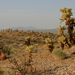 Cholla country