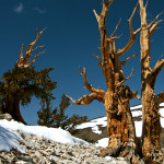 Colin Fletcher_Andreas M Cohrs_California hiking_White Mountains_Ancient Bristlecone Pines
