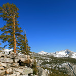 Colin Fletcher_Andreas M Cohrs_California hiking_High Sierra Nevada_singing trees
